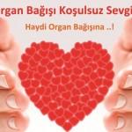 Organ Naklinde En Duyarlı İlimiz